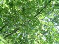 20060520-2.jpg